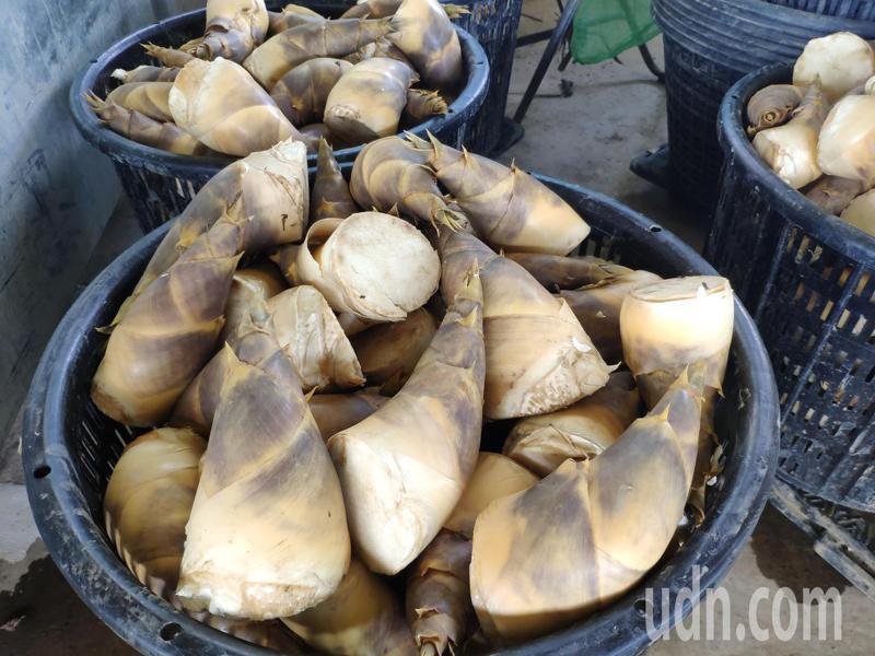 台南白河綠竹筍上市,價格看俏。記者謝進盛/攝影