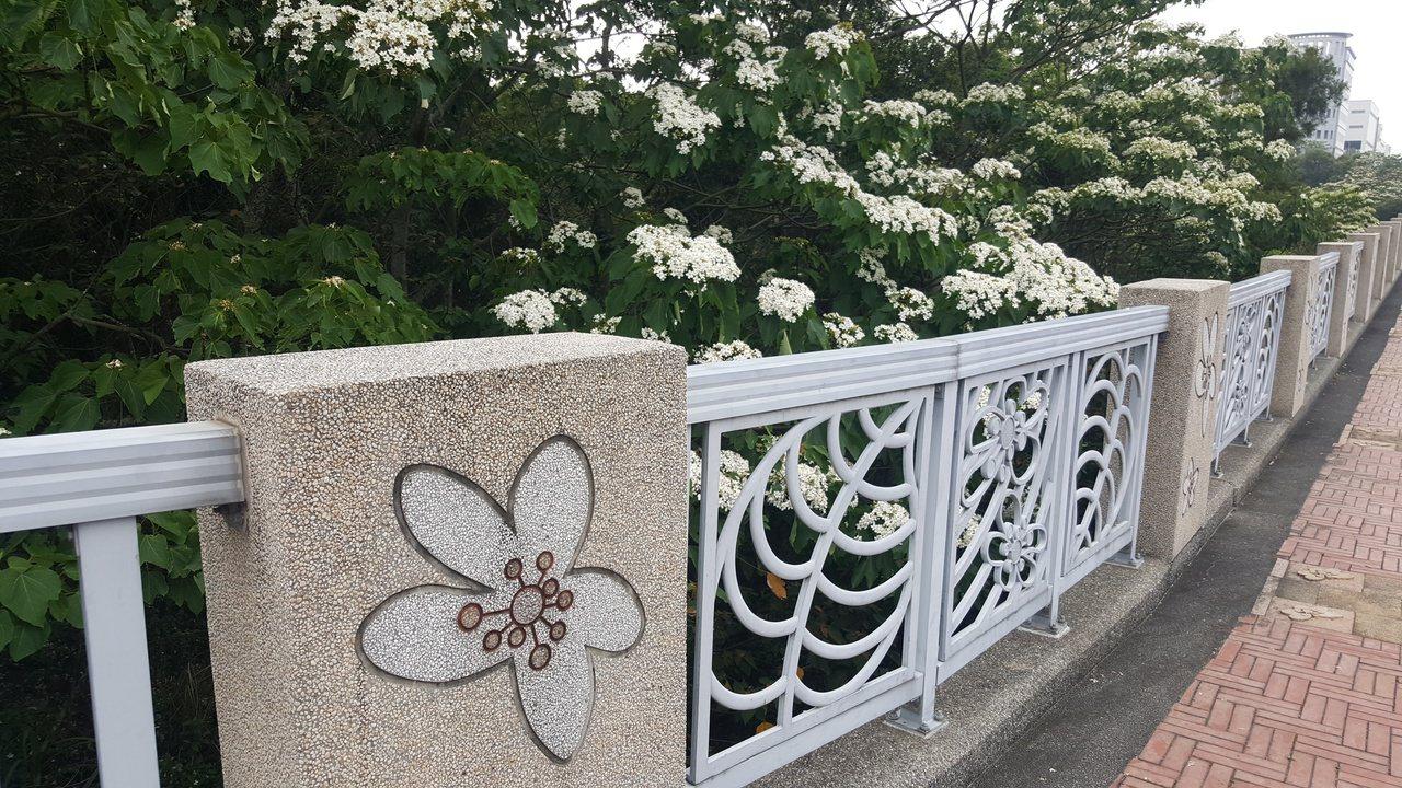 銅鑼科學園區台灣客家文化館周邊,處處有桐花美景。 圖/胡蓬生 攝影