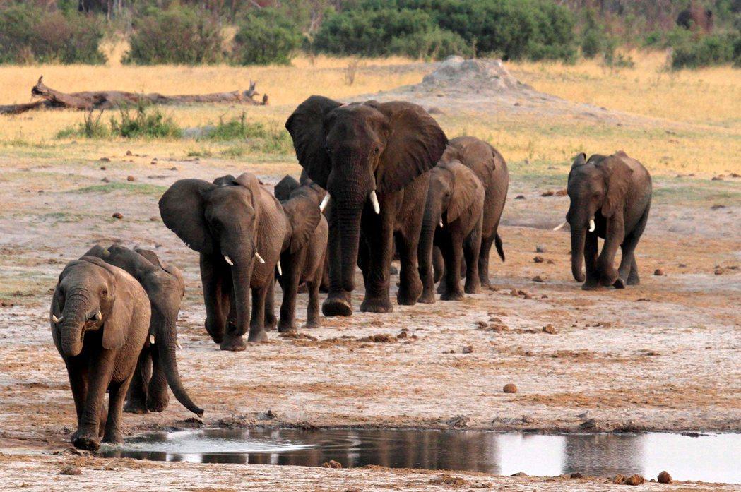 辛巴威的萬蓋國家公園。 圖/路透社