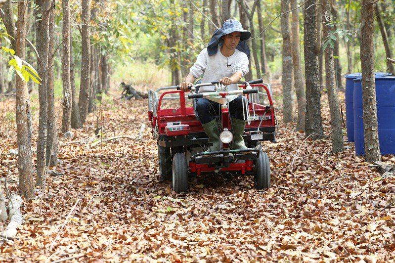 林務局1997年起陸續推動造林,孕育逾4萬公頃林地,但未審慎評估樹種,經濟價值不高,種滿20年究竟要砍或留,林農無所適從。記者劉學聖/攝影