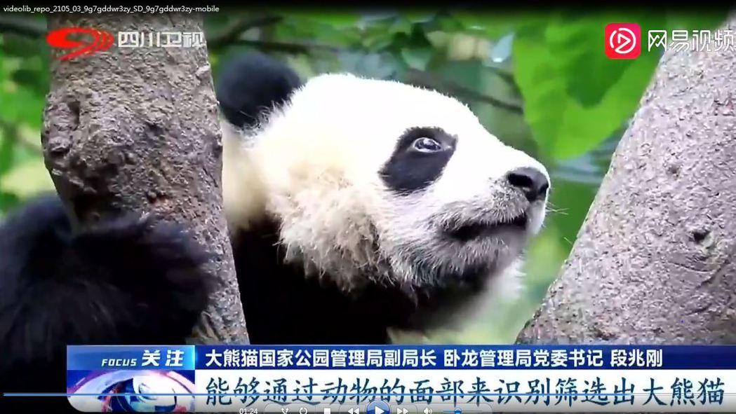大熊貓國家公園管理局副局長段兆剛指,貓臉人工智慧識別系統,能透過動物面部識別,篩...