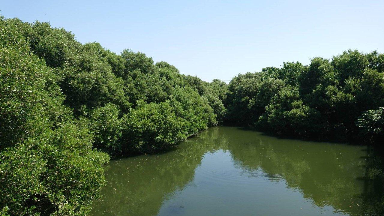 台南市南區鯤鯓路紅樹林步道,有美麗的紅樹林景觀。 圖/鄭惠仁 攝影