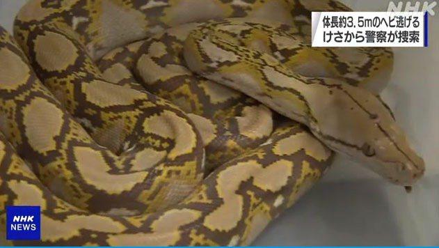 圖擷自NHK