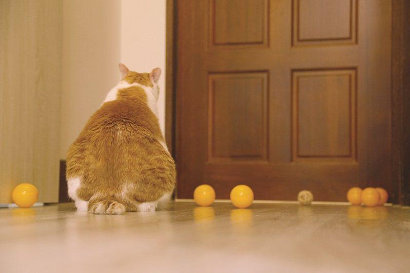 豐滿的背影,等著貓奴回家。圖/布克文化 提供