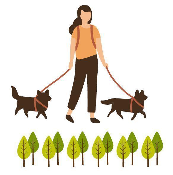 散步對自己和狗狗的健康都有好處。圖/123RF