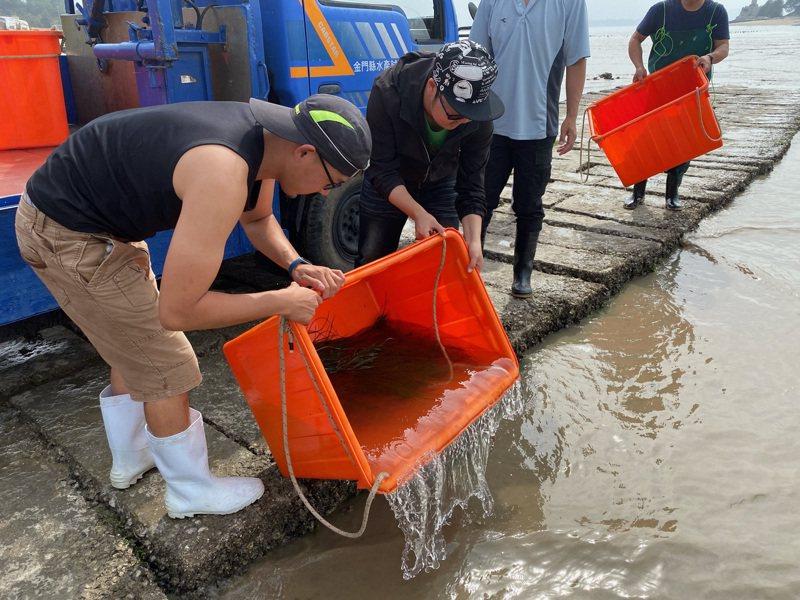 金門縣水產試驗所今日在金城鎮南門雄獅堡出海口之水域放流8萬尾遠海梭子蟹蟹苗種源。圖/金門縣水試所提供