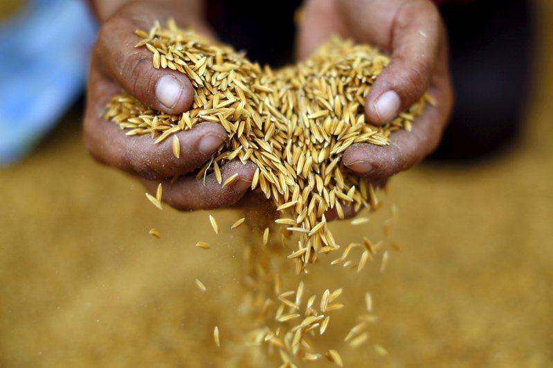 近來穀物價格飆高,引燃糧食成本飛漲和全球饑荒的疑慮,但米價相對持穩,有助防止危機擴大。(路透)