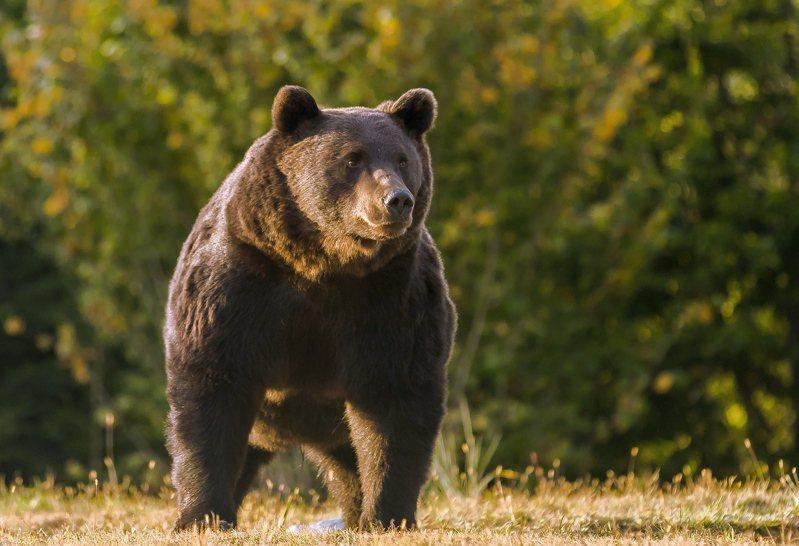 列支敦士登王子伊曼紐爾王子(Emanuel von und zu Liechtenstein)被控獵殺了歐洲體型最大的一頭棕熊。歐新社