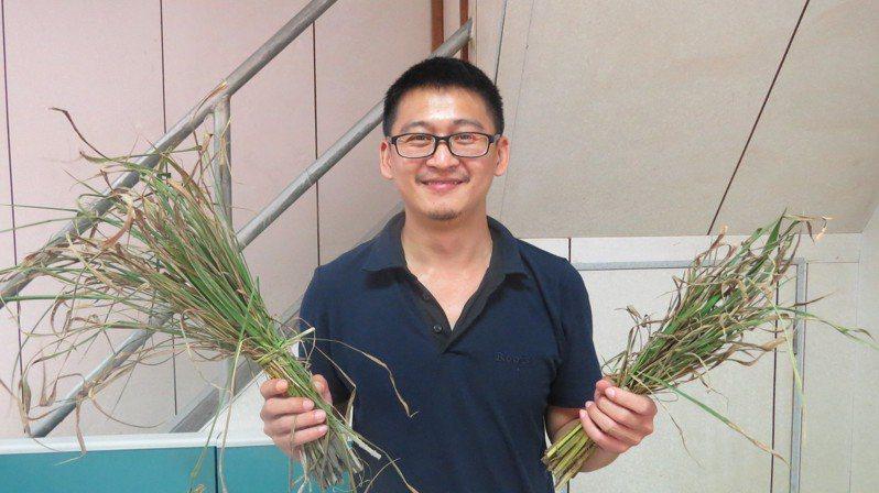 儲備植物醫師黃世宏最近進駐苗栗縣公館鄉農會,認為工作能與興趣結合,樂此不疲。記者范榮達/攝影