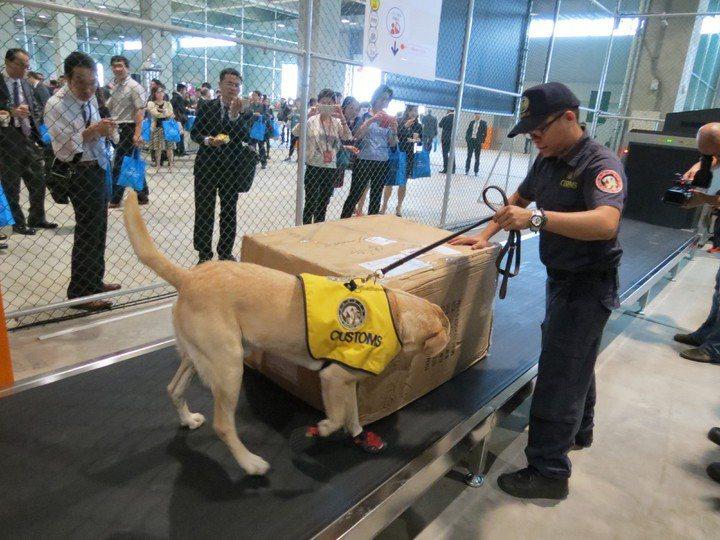 關務署的緝毒犬退役不開放一般民眾認養,僅有退役犬的原領犬員、原寄養家庭,或者現職軍公教人員,和領有月退俸的退休軍公教人員,有資格認養。鎮。圖/聯合報系資料照片