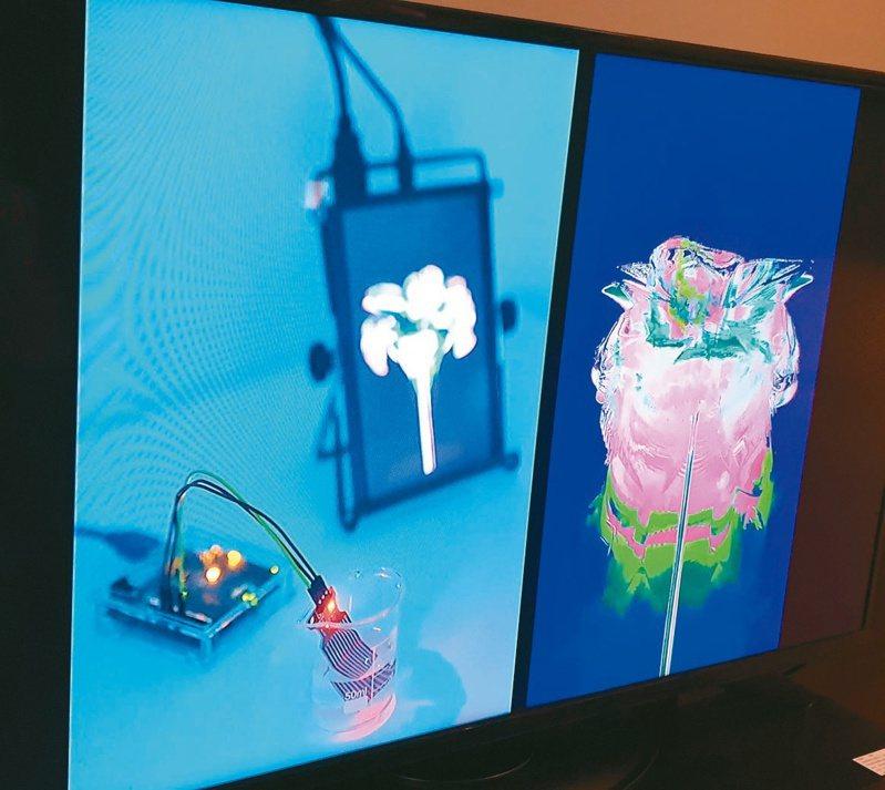 藝術家李嘉瑩的「種植」在平板電腦裡種了一朵花,只要把連結的感應器放入水中,螢幕裡的花便會展開花開花落的生命輪迴。記者陳宛茜/攝影