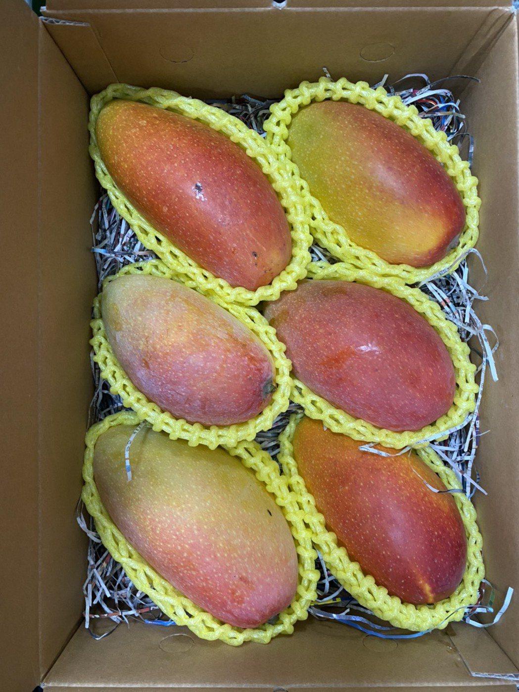 詮豐農場芒果成熟了!香甜汁多味美。 詮豐農場/提供