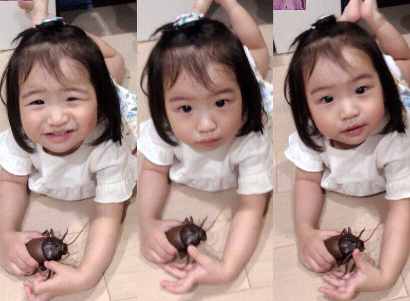 雙胞胎女星佩佩買了很多蟑螂玩具給女兒玩。圖/佩佩提供