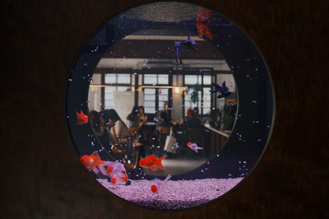 圓形魚缸的金魚,有如一幅動態的日本畫。 圖/江佩君攝影