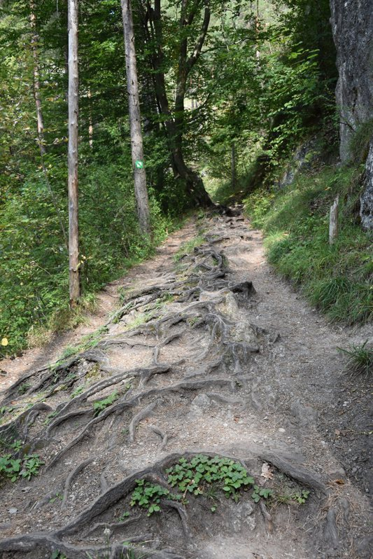 綠線登山路線