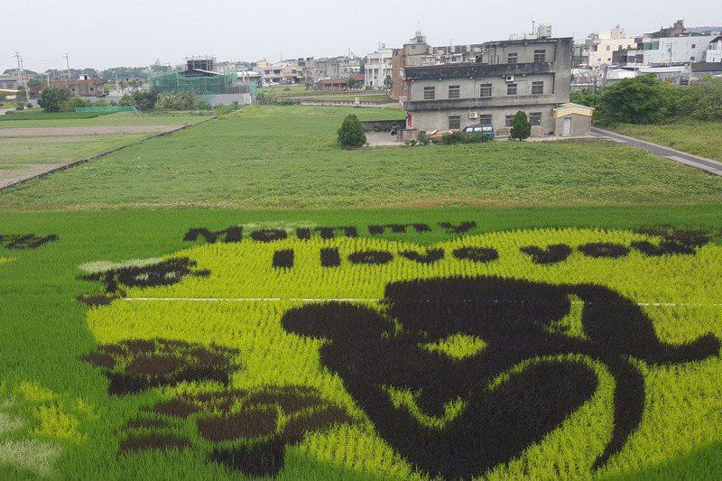 苑裡農會今年一期作稻田彩繪作品,以母親節主題設計「Mommy I love you」的溫馨圖案。記者胡蓬生/攝影