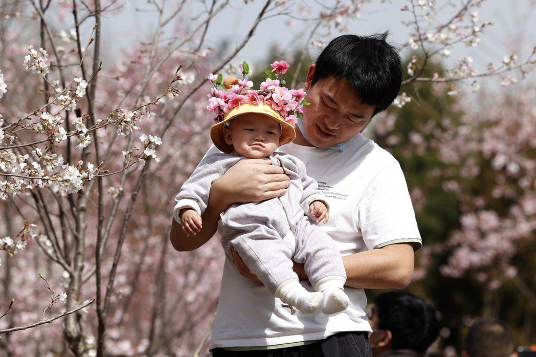 中國大陸之前實施的「一胎化」政策,使生育率持續下降。圖/美聯社