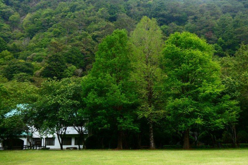 明天是「512國際護師節」,南投縣奧萬大森林遊樂區明起至16日一連5天優惠醫事人員免費入園。圖/南投林管處提供