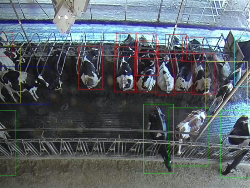 Cainthus研發出乳牛影像辨識系統,透過影像分析,可以記錄各別牛隻的健康狀況...