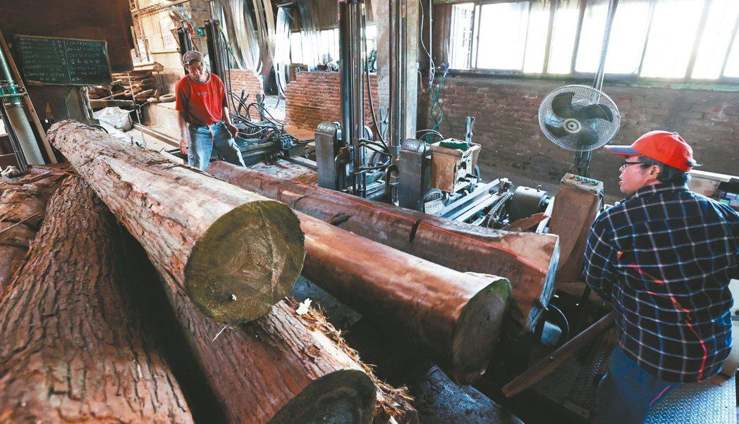 柳杉原木經大剖等流程切割成不同尺寸後,將製成建築用板模。記者侯永全/攝影