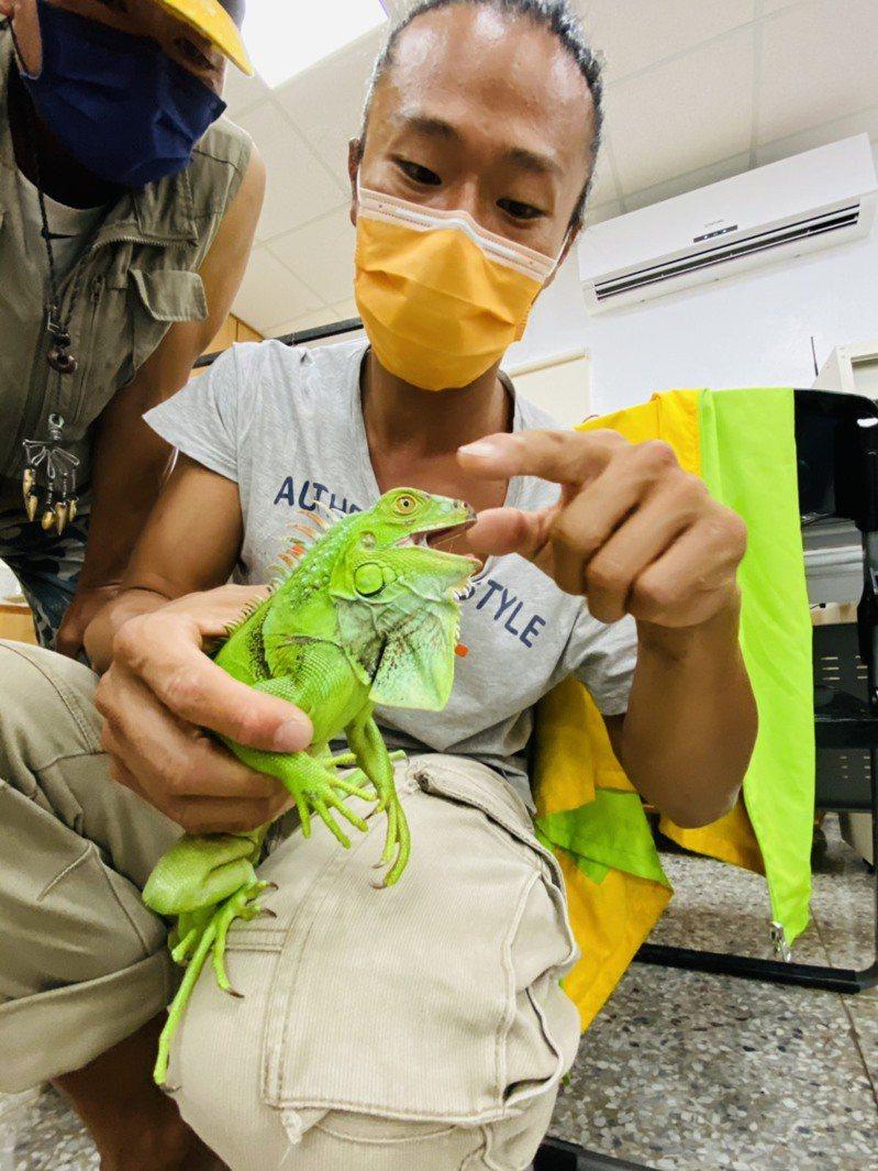 生態工作者汪仁傑分享台東綠鬣蜥分布情況。記者施鴻基/攝影