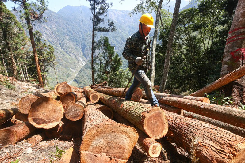 推動國產材面臨困境,環保署表示,將與林務局討論是否調整環評門檻或認定標準的可行性,希望找到生態保育、產業發展的平衡。記者黃仲裕/攝影