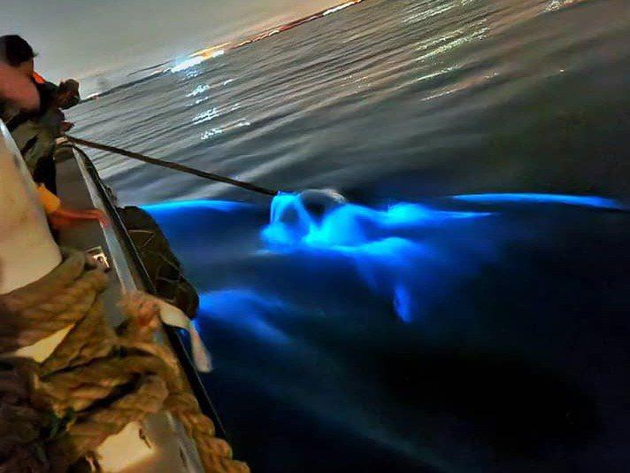 金門今年新興的「出海追淚」遊程,遊客除可欣賞廈門夜景,還可追淚,相當受歡迎。圖/盧文雄提供