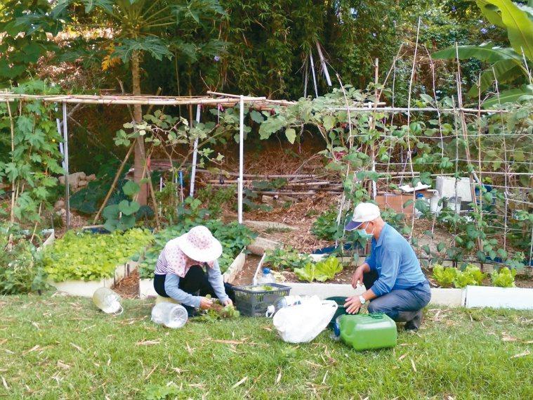 好鄰居也邀請婆婆一起栽種蔬菜水果,收成後分享給社區住民。圖/謝純碧提供