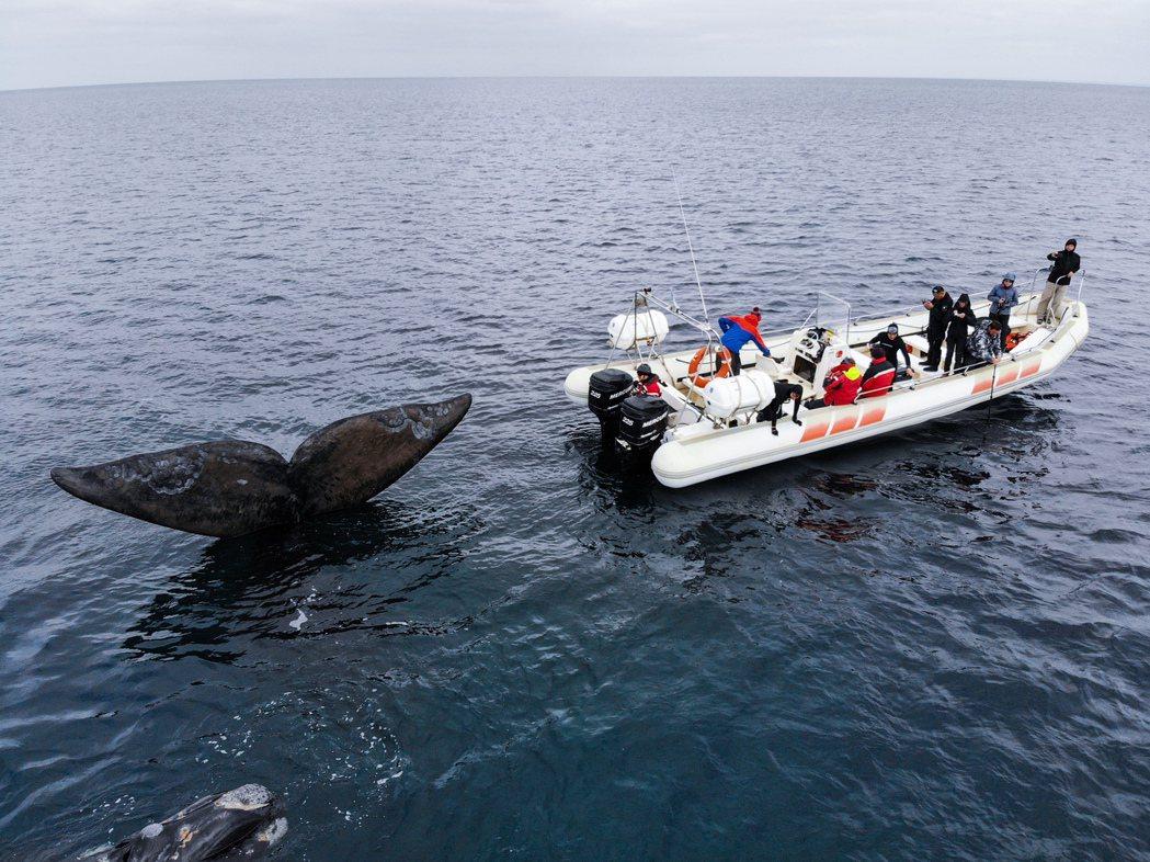 鯨豚拍攝現場。 圖/金磊提供