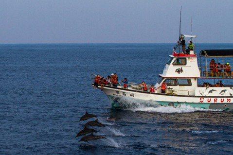 黑潮與多羅滿賞鯨公司合作,三樓甲板是解說員和搜尋鯨豚的船員工作的空間。 圖/Do...