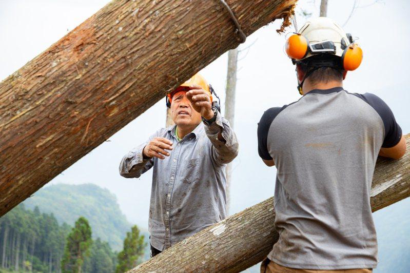林務局、國貿局合作,針對紅檜、扁柏、牛樟、肖楠等4種貴重木加嚴管制,須取得合法文件及台灣木材標章才准出口,最快明年上半年上路,圖為示意圖。記者曾原信/攝影