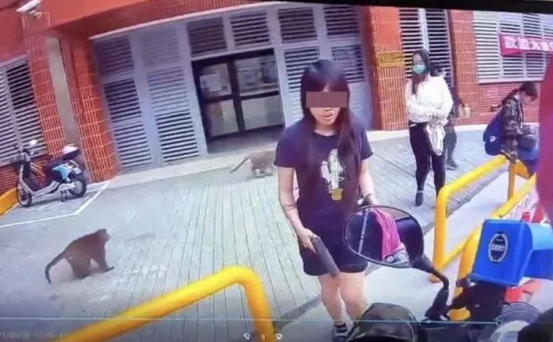 高雄有女大生向外送員取餐時,手持BB彈槍防範猴子靠近搶食。圖/翻攝自「爆廢1公社」