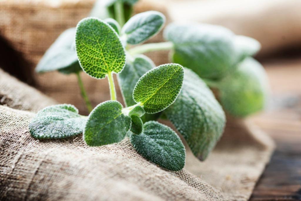 增加免疫力的精油有綠薄荷、乳香、檸檬、血橙;輔助呼吸道抗發炎的有尤加利、赤松、絲...