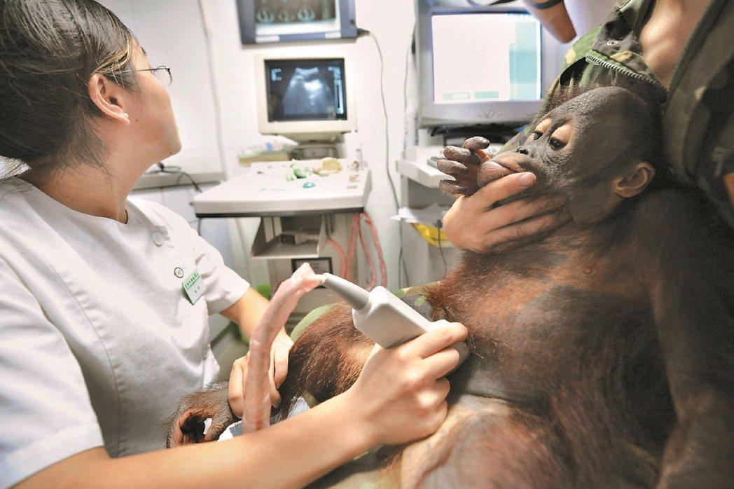 2008年中國震撼的三鹿集團毒奶事件,也波及到杭州野生動物世界。當時園中的一隻幼...