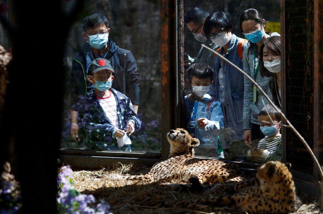 一個號稱「野生動物」的園區竟然設有馬戲團和動物遊藝場?有一面做動物教育,又一面搞...