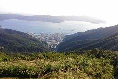 憂特有種遭獵食 日本奄美大島10年撲殺野貓3000隻