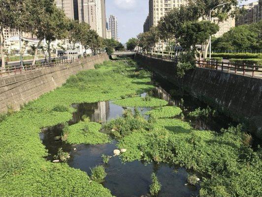 豆子埔溪遭議員批評如亞馬遜河,淤積嚴重要求縣府儘速清淤。記者巫鴻瑋/翻攝