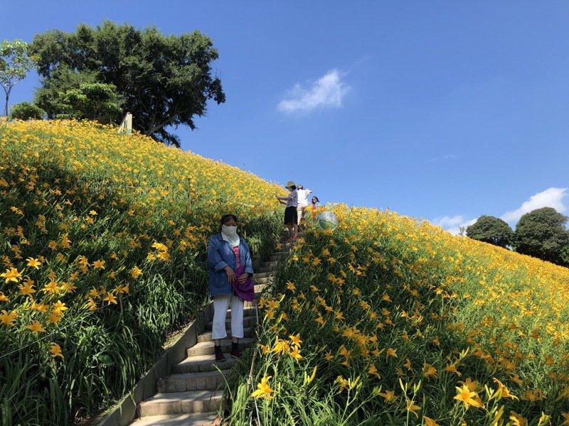 彰化花壇虎山巖金針花園今天人潮明顯減少。記者林敬家/攝影
