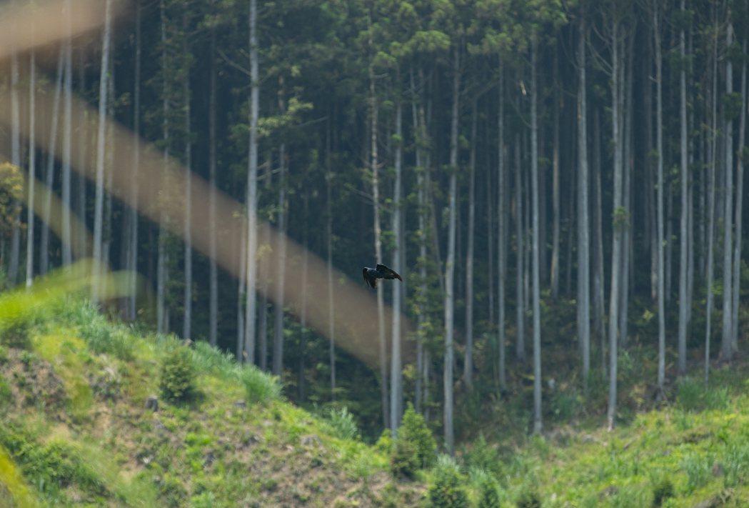 林業示意圖,與本文內容無關。記者曾原信/攝影