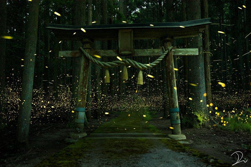一位日本網友在某座日本神社,拍下數量驚人的螢火蟲聚集美景。圖擷取自twitter