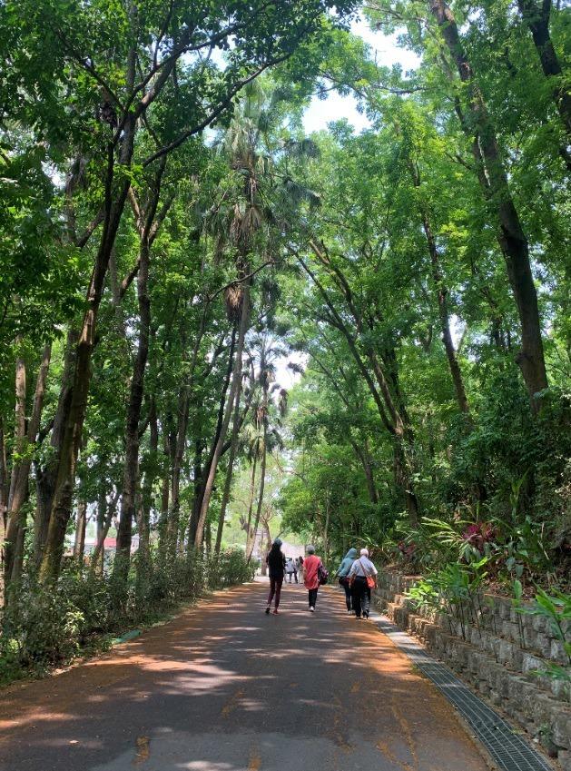 中興大學新化林場被導演魏德聖選中,成為台灣三部曲拍片場景之一。 圖/吳淑玲 攝影