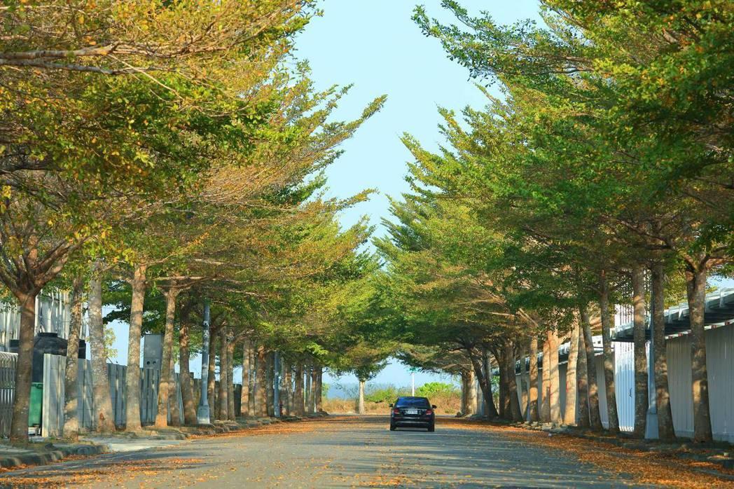歸仁區公所在主幹道上種植多樣樹種,形成生態豐富的林蔭大道。