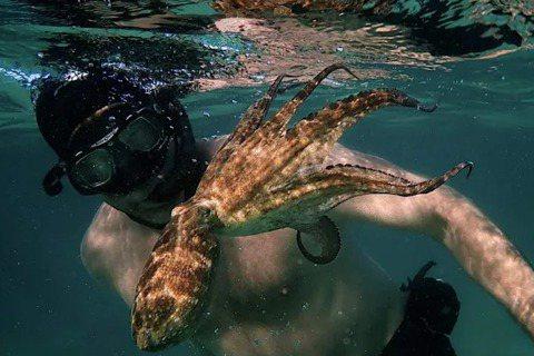 《我的章魚老師》(My Octopus Teacher)劇照。 圖/Netfli...