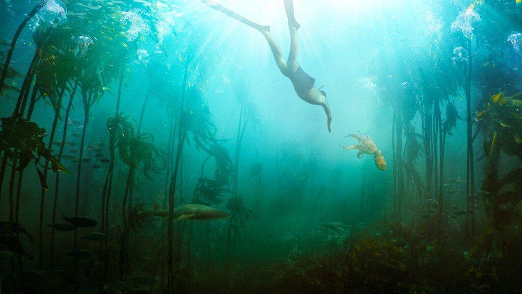 紀錄片講述克雷格與章魚的跨物種友誼。 圖/Netflix