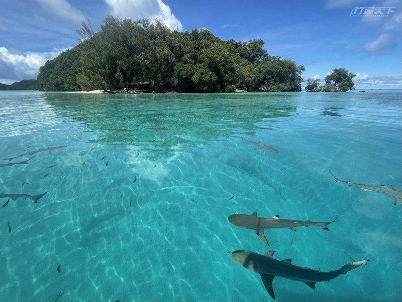 彷彿知道我們的興奮,鯊魚越游越靠近水面!