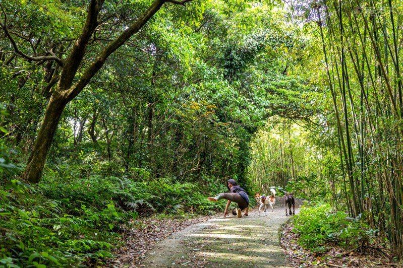 走進森林,跟可愛的狗狗一起玩一起鬧好不愜意。
