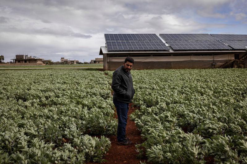 敘利亞伊德利卜市附近一座農場的場主奇比,站在他的作物前,後方就是供給灌溉幫浦電力的太陽能板。圖/取自紐約時報