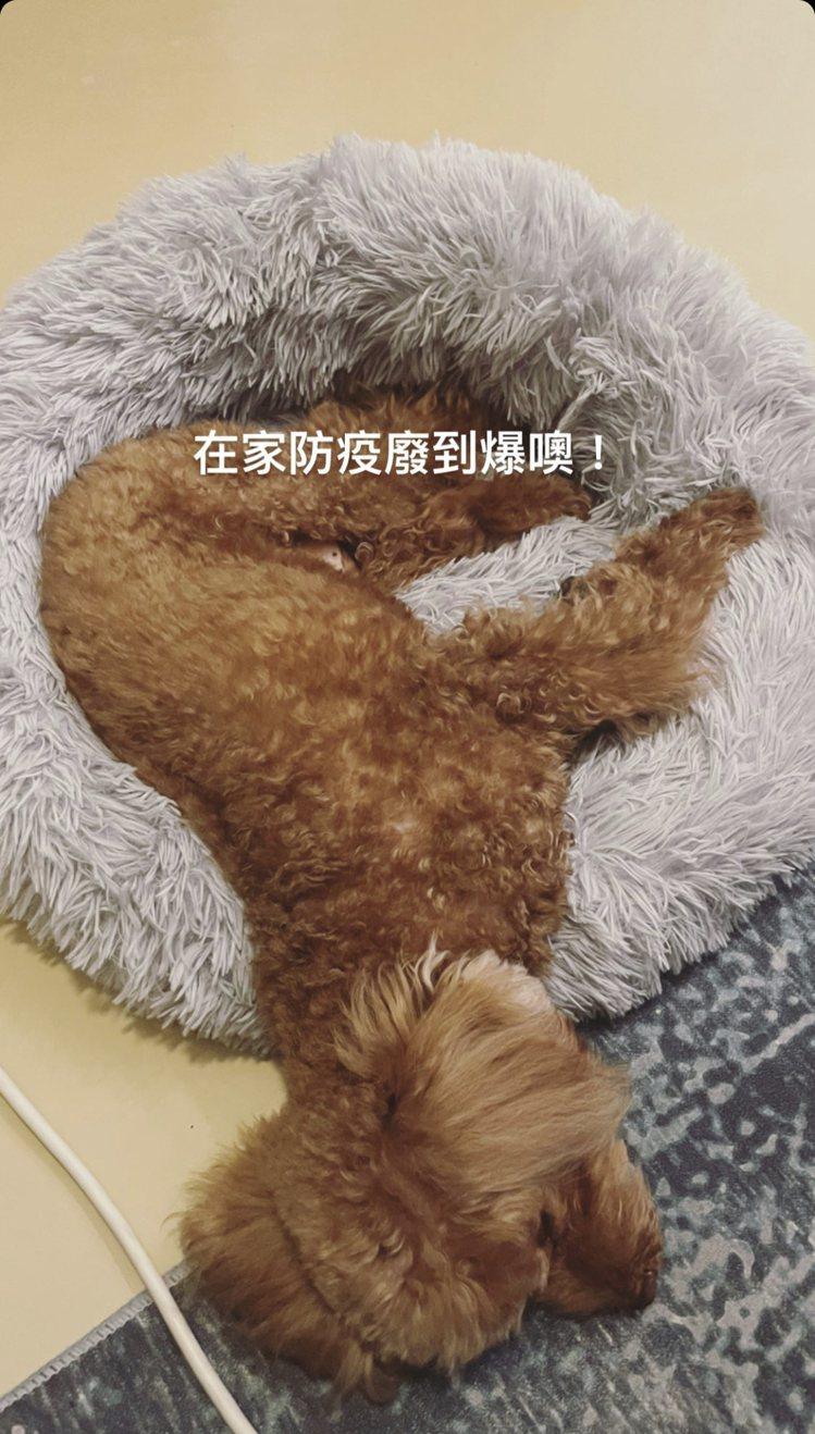 謝欣穎拍愛犬。圖/摘自IG