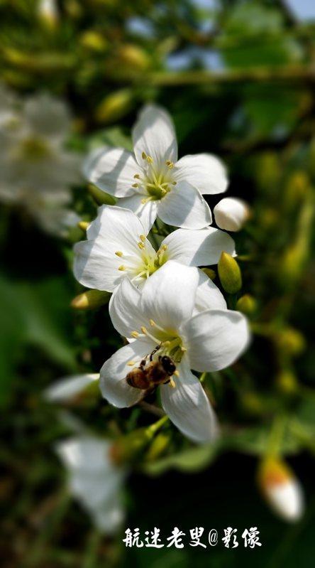 花開花落成就美麗盛景,質樸純淨卻有些孤芳自賞,卻吸引蜜蜂前來採蜜。