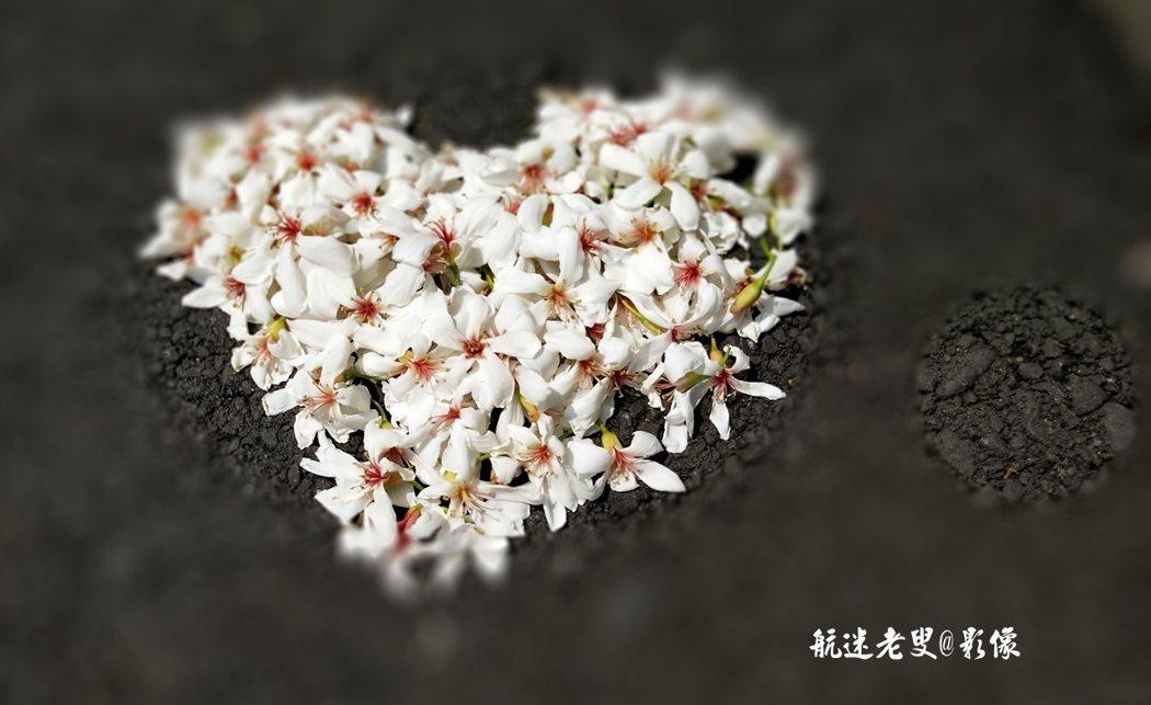 一簇簇雪白的花朵佈滿山林枝頭,眺望宛如冬之薄雪,純白的花朵在盛開之際繽紛落入大地,鋪滿地表,形成另類雪景,人們又叫它為五月雪,桐花凋落時,在它最美的時候。